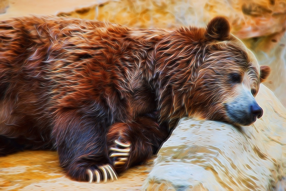 Sleepy bear.