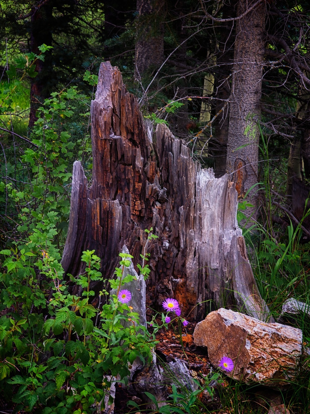 just a tree stump with a nice rock and some flowers