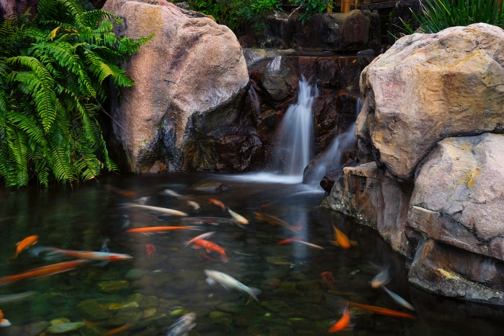 A closeup of the koi pond.