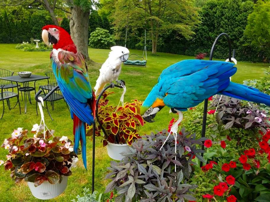 Friendly parrots.