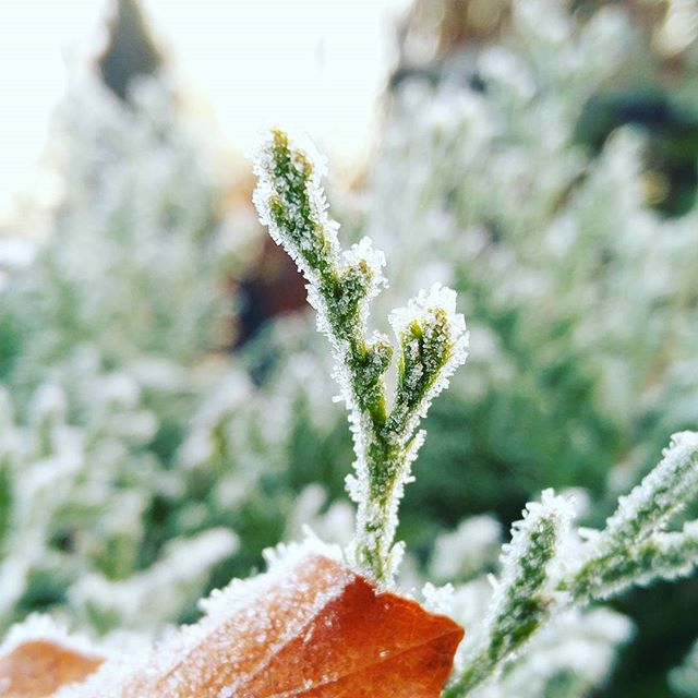 #frosty #morning today  #winteriscoming #raureif