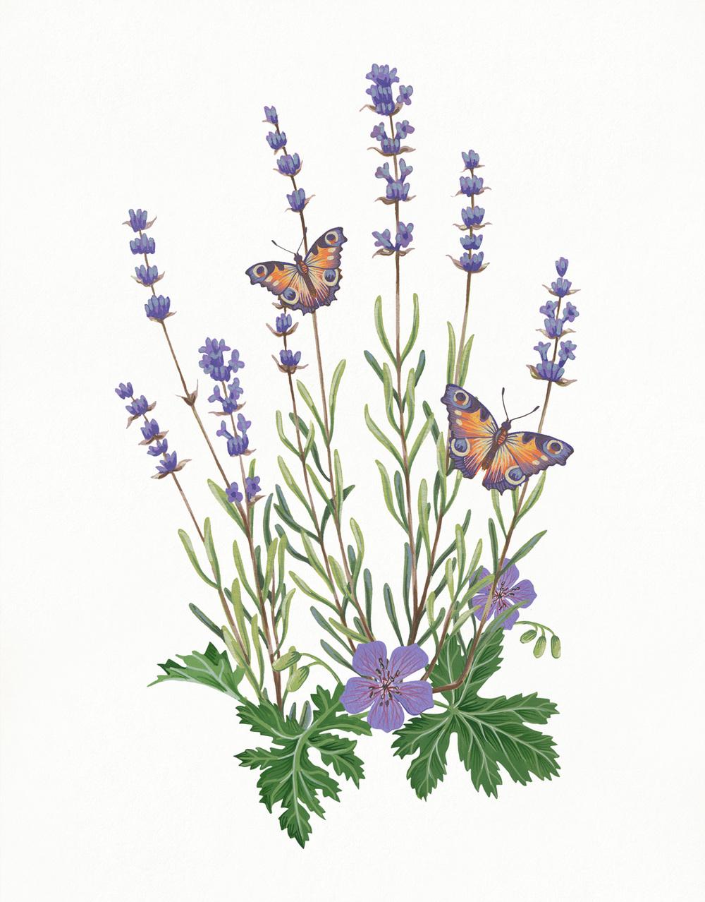 MS_Lavender.jpg