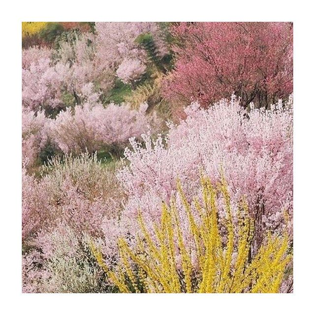 It's freezing here on the east coast but here is some pretty spring color inspo to get you through.  PS daylight savings starts THIS WEEKEND!