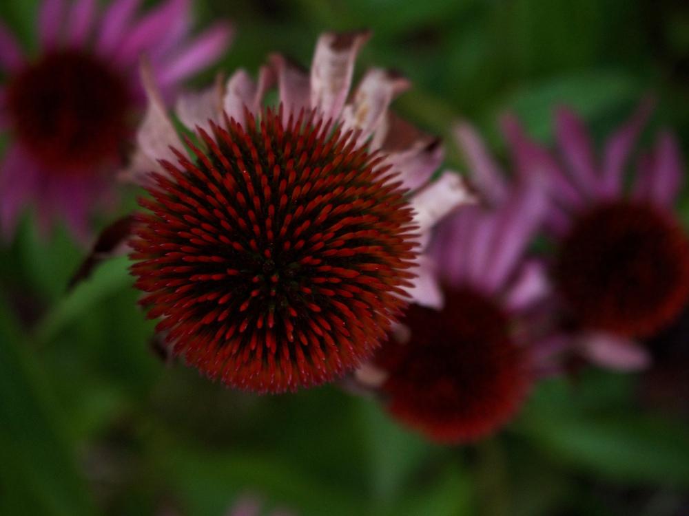 Garden Variety Flower