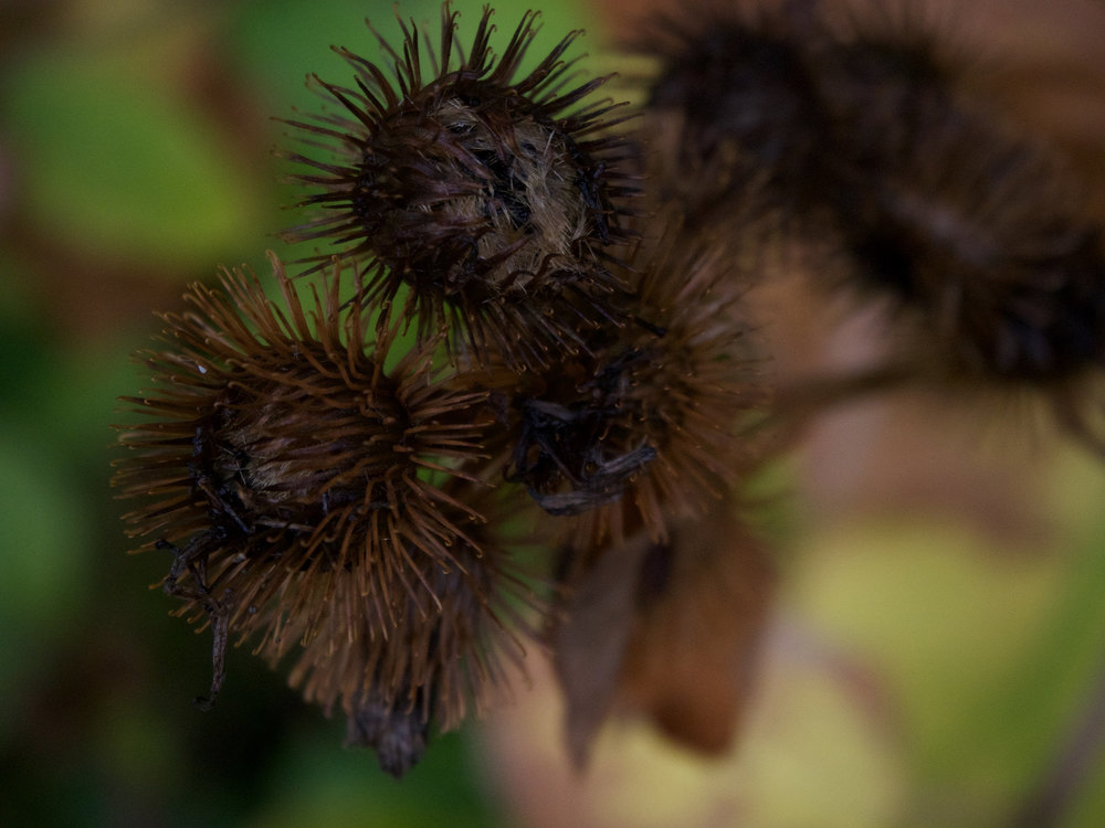 Prickle Burrs