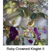 Kinglet 2_thmb.jpg