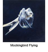 Mockbrd fly_thmb.jpg