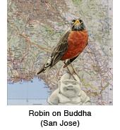 Robin_Buddha_thmb.jpg