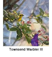 Town Warb_3_thmb.jpg
