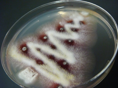 fungal-christmas-tree-2.jpg