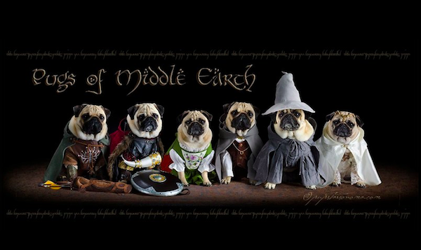 pugs of middle earth.png