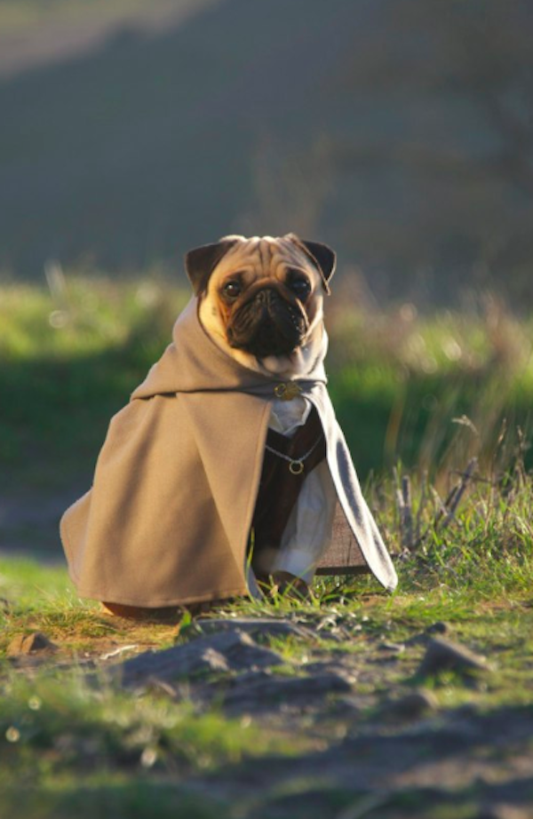 pugs of middle earth 8.png
