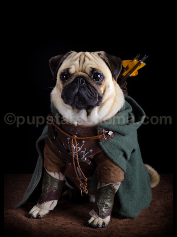 pugs of middle earth 4.png