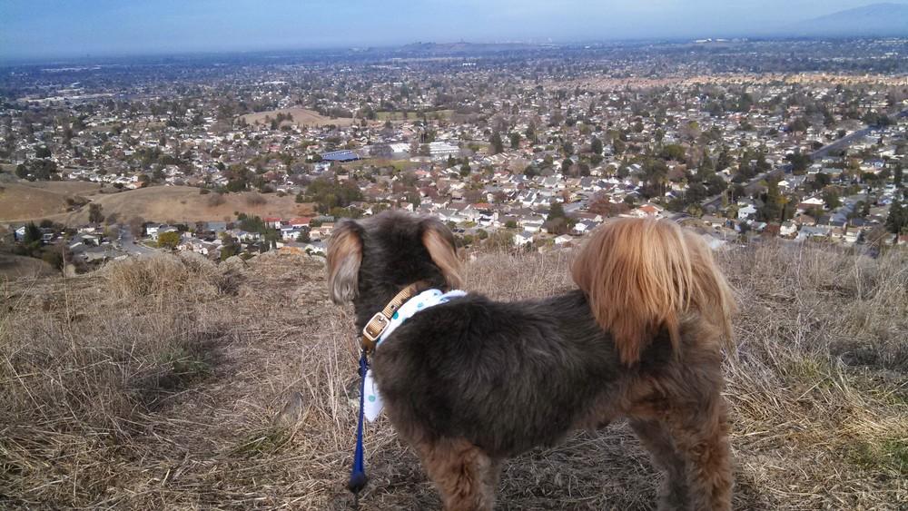 Walking our dog BROWNIE at Santa Teresa County Park