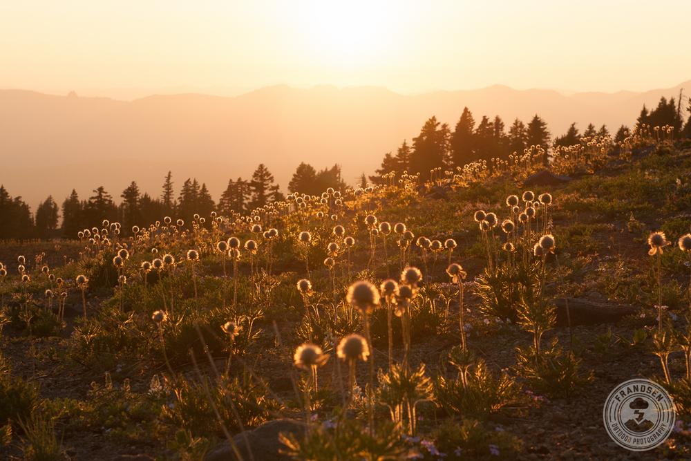 1207_Oregon_560.jpg