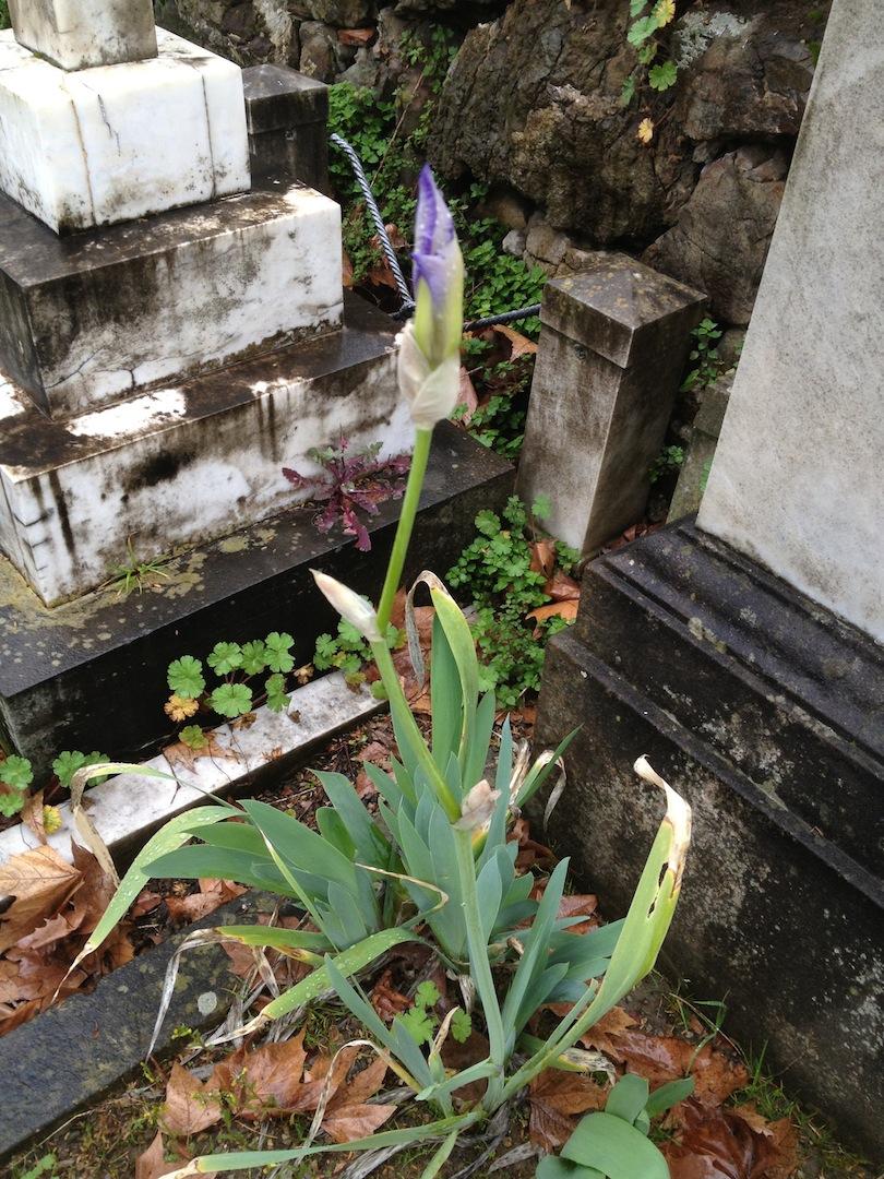 English-Cemetery-Florence-Cimitero-Inglese-Firenze-jessewaugh.com-74.jpg
