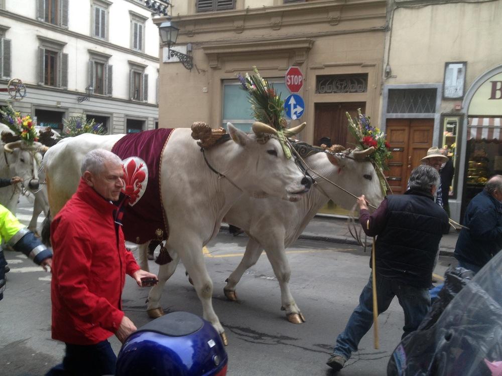 Florence-Easter-Parade-Juggernaut-Bulls-Dove-jessewaugh.com-7.jpg