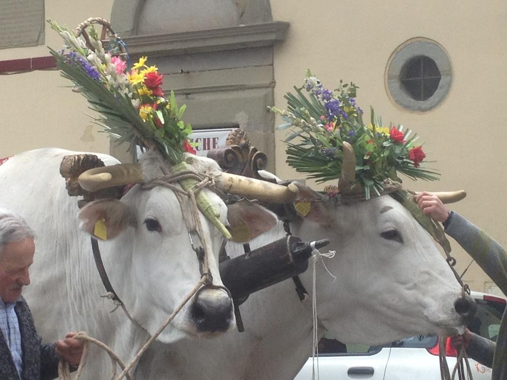 Florence-Easter-Parade-Juggernaut-Bulls-Dove-jessewaugh.com-21.jpg