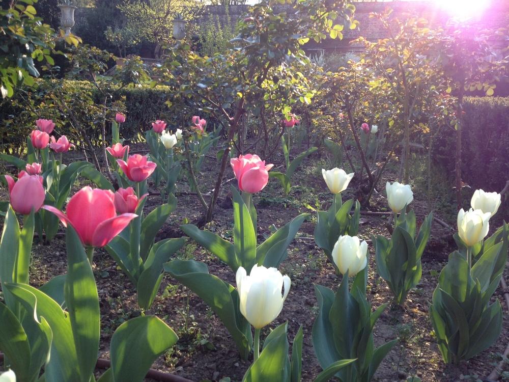 TORRIGIANI-GARDENS-FLOWERS-jessewaugh.com-3.jpg
