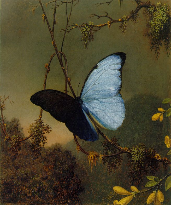 Blue Morpho Butterfly Martin Johnson Heade c 1864-65 Oil on canvas