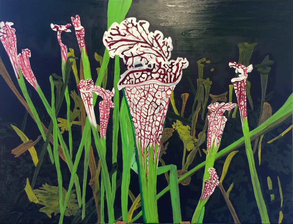 Jesse Waugh Pitcher Plants: Sarracenia leucophylla Raf 2013 Oil on canvas
