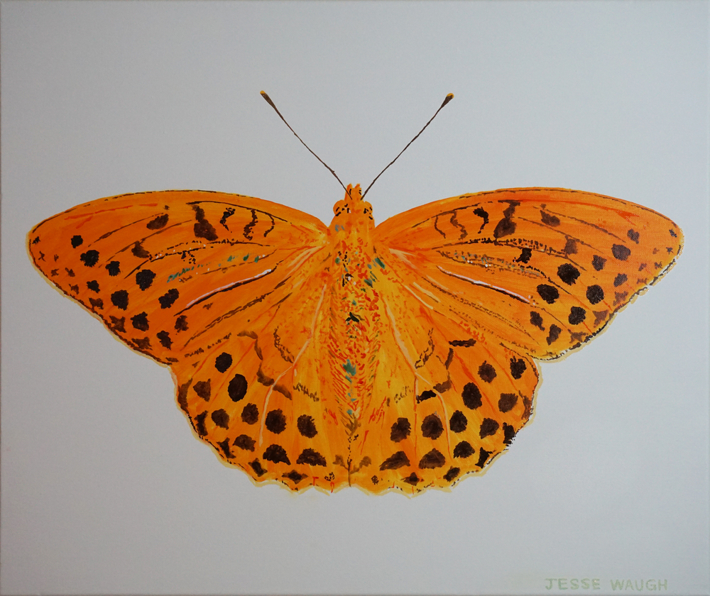 JESSE WAUGH   Argynnis paphia - Silver washed fritillary   BUTTERFLY 2 2015 OIL ON CANVAS