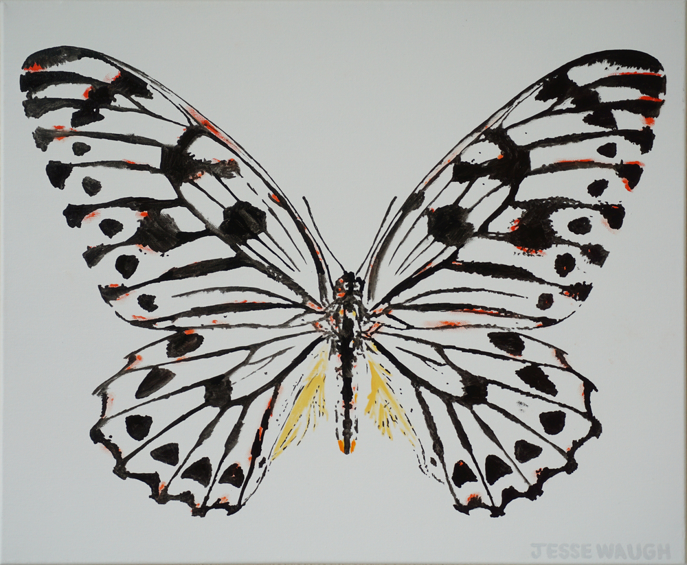 JESSE WAUGH   Graphium idaeoides   BUTTERFLY 3 2015 OIL ON CANVAS
