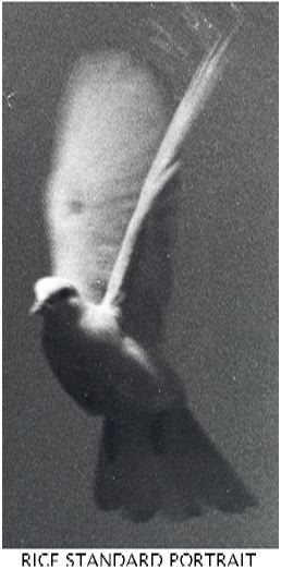 31 RICE STANDARD PORTRAIT1.jpg