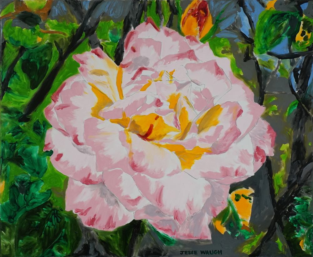 JESSE WAUGH   BROMPTON ROSE   2016 OIL ON CANVAS