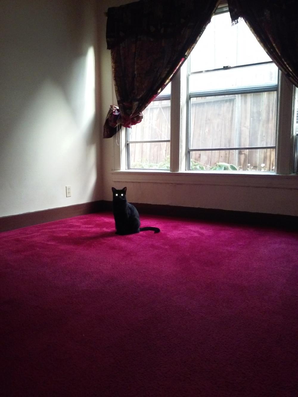 Black-Cat-Manuel-De-Jesus-Munoz-jessewaugh.com.jpg