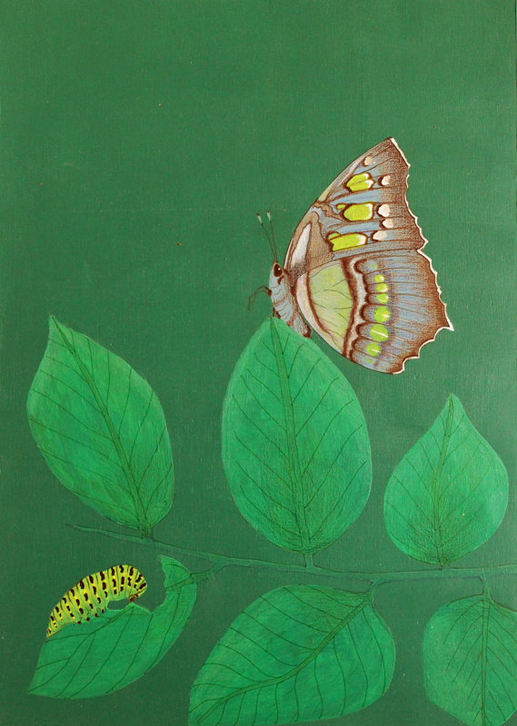 Butterfly green small.jpg