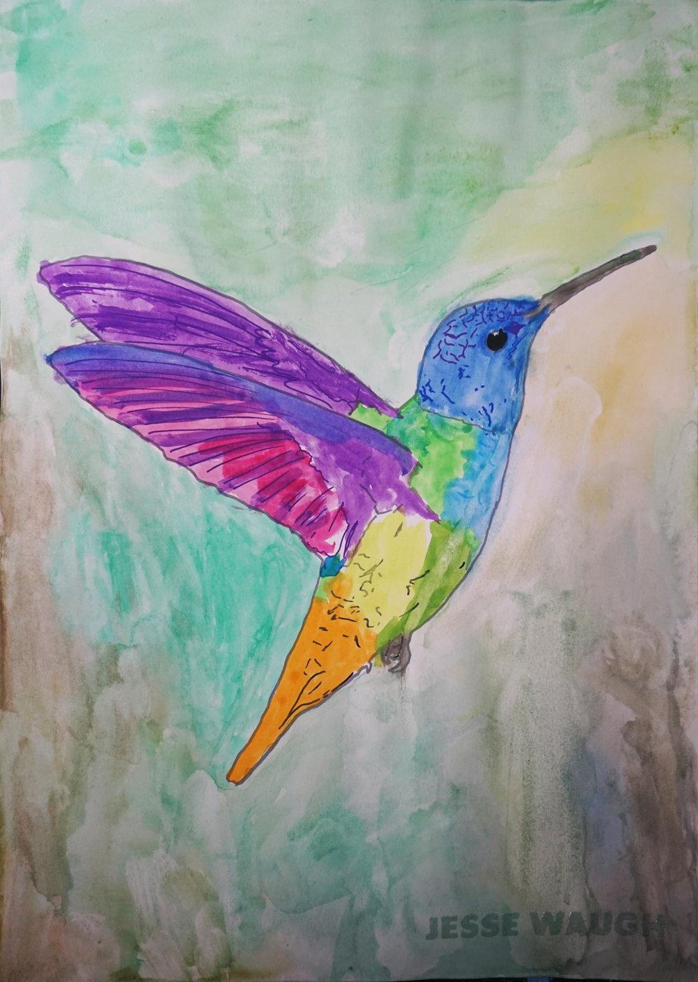 Jesse Waugh   Colibrí   2017 Watercolor 29.7 X 42 cm (A3)