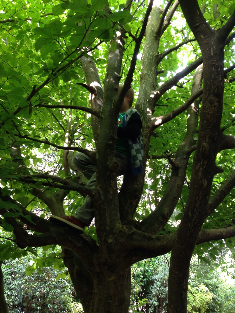 Quinn in a tree. Summer is over but childhood goes on.