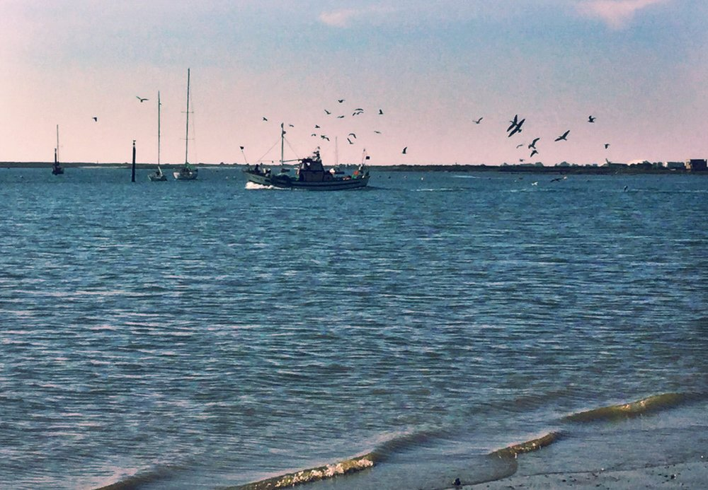 A fisherman heading out to sea from Tavira harbor with his retinue of hungry seagulls.