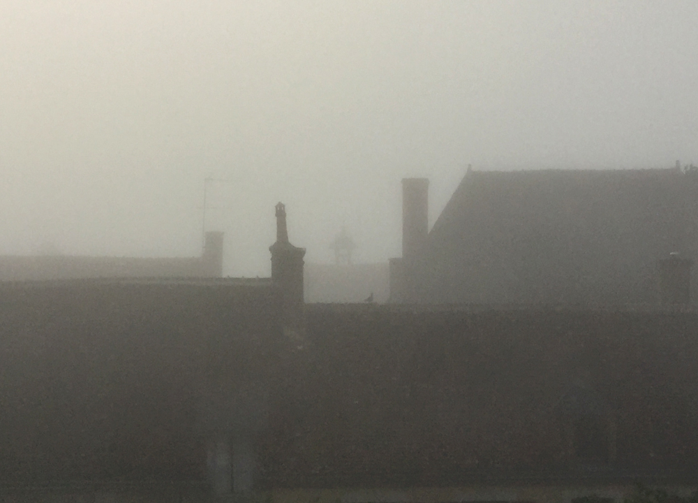 Foggy morning, an unusual sight. This day went on to be sunny and warm.