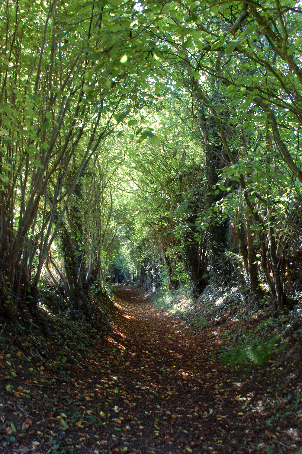 The holloway entrance to the forest of Montmirail, which I call  the rabbit hole .