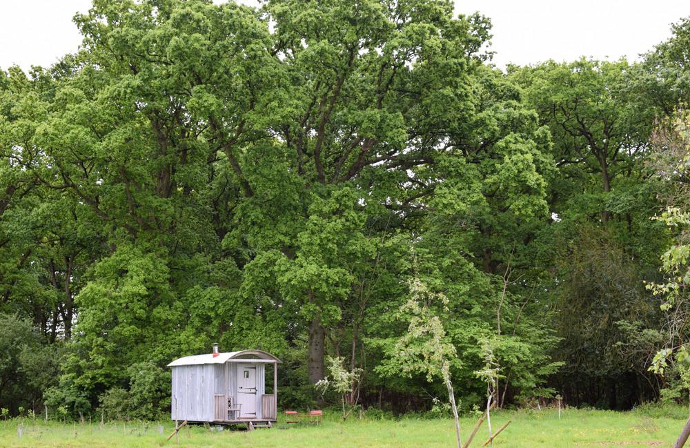 Longhord hut.jpg