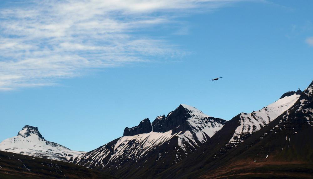 Lone bird, Iceland.