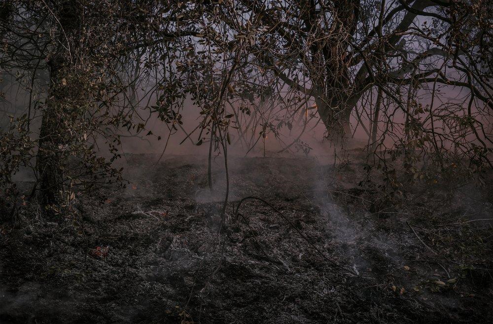 Nuns Fire, Santa Rosa, CA