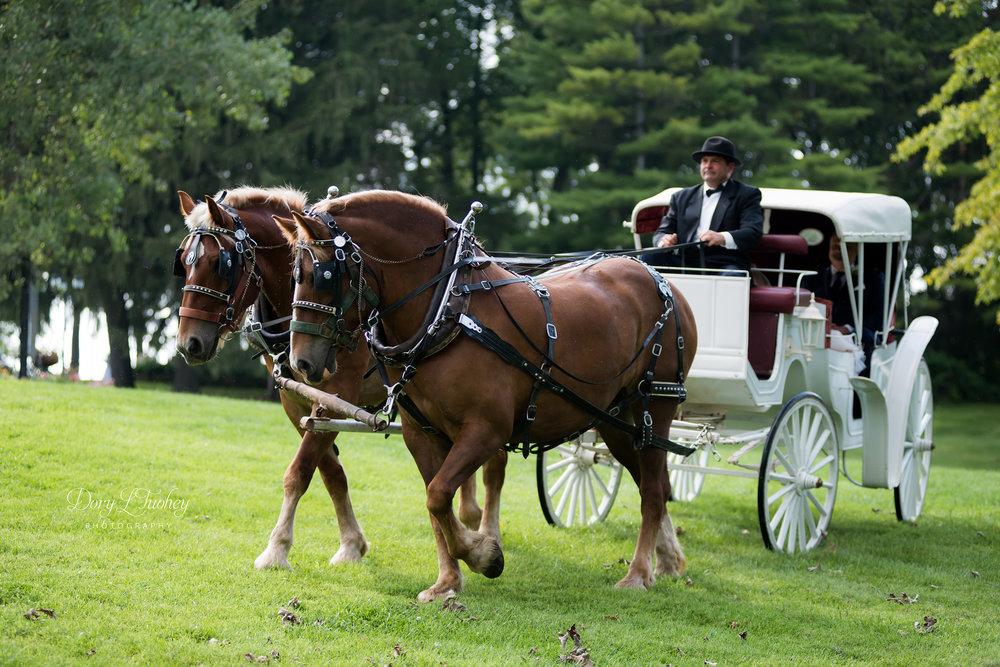 Dory_wedding_farm_country_equestrian_horses_bride_groom_apple_valley_01.jpg