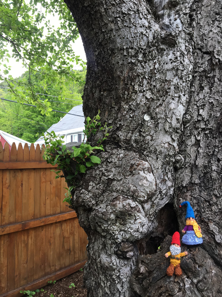 The gnomes were spotted cavorting in a tree in the yard.