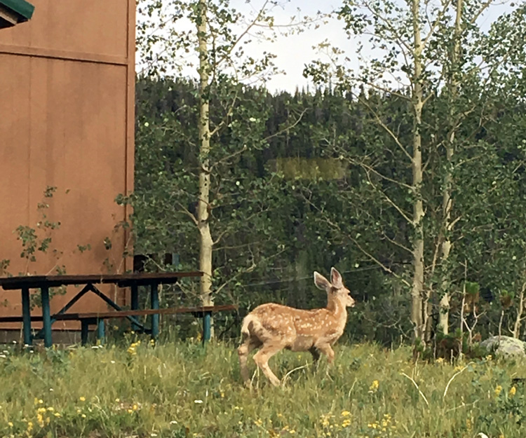 Fawn right outside the classroom window