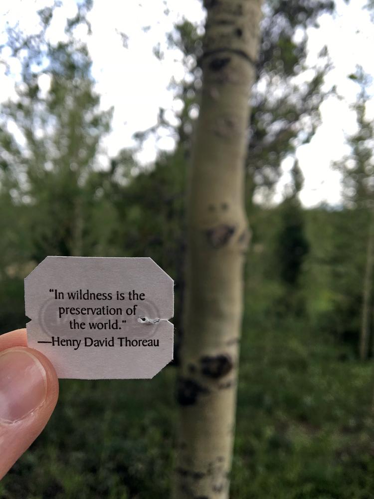 ThoreauQuote.jpg