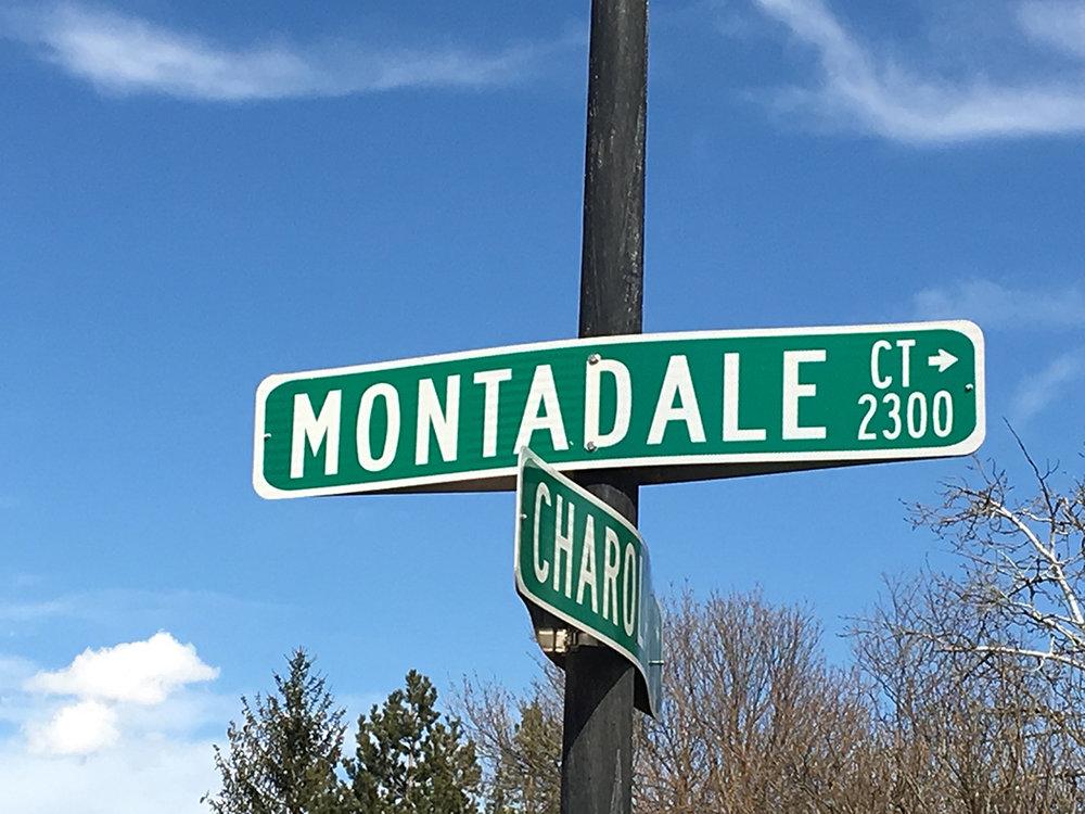 SheepMontadale.jpg