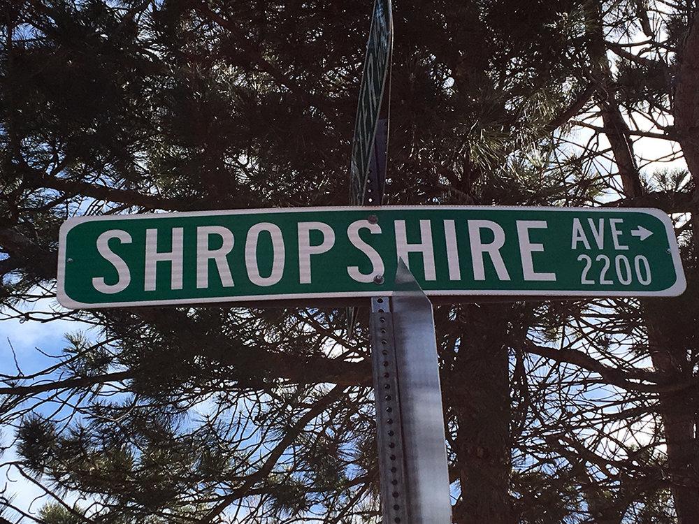 SheepShropshire.jpg