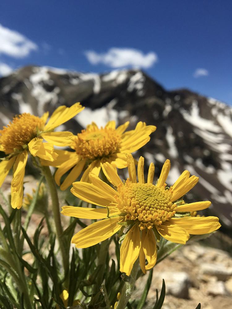 Rebecca Mezoff, Wasatch flowers, American Fork Twin Peaks