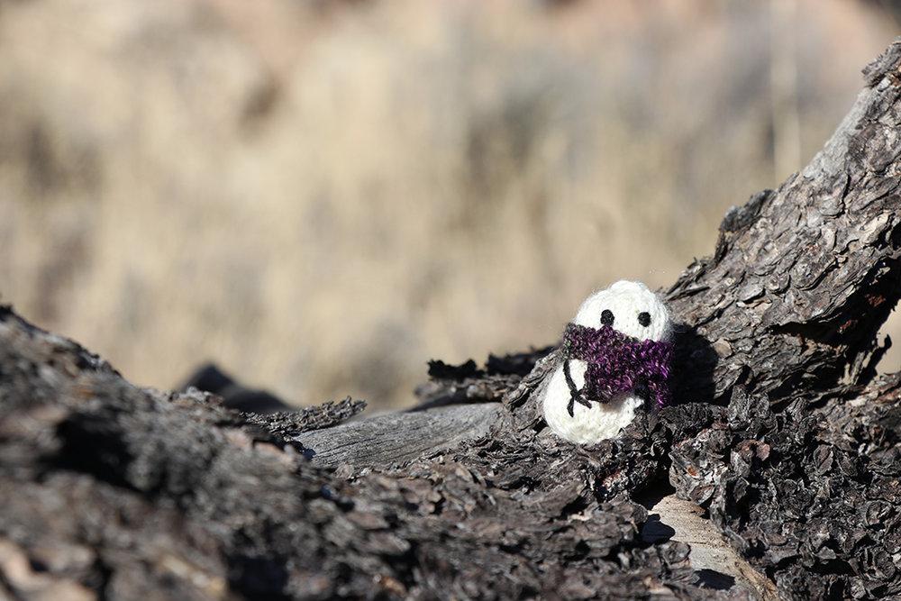 Sunbathing in New Mexico