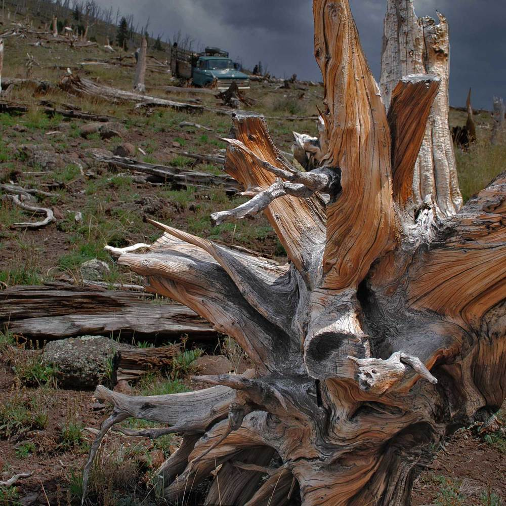 bristlecone_stump