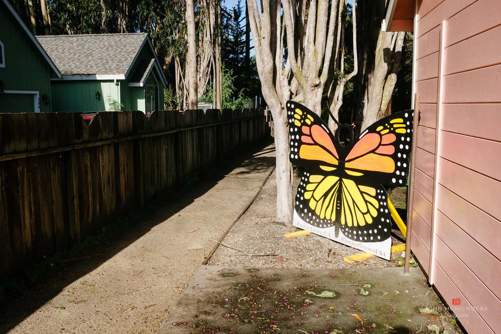 Monarch Grove Sanctuary_25735895095_l.jpg
