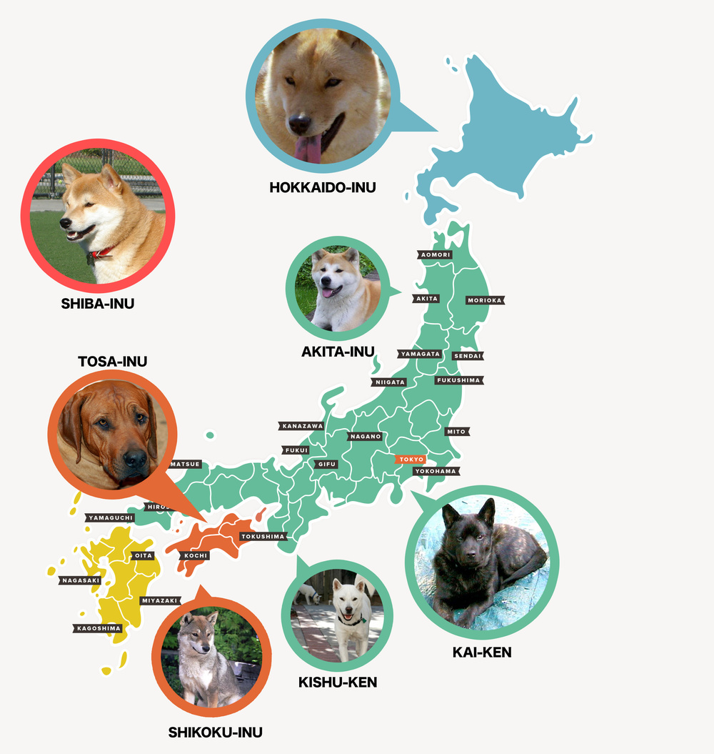 The popular dogs of Japan